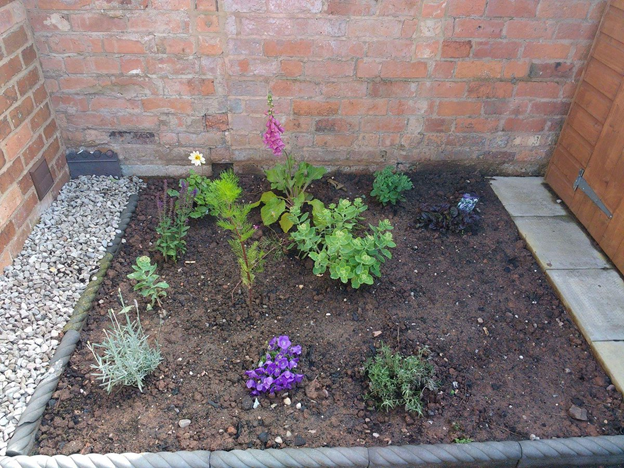Small young potager garden with foxglove, lavender, cosmos and a few other bedding plants.